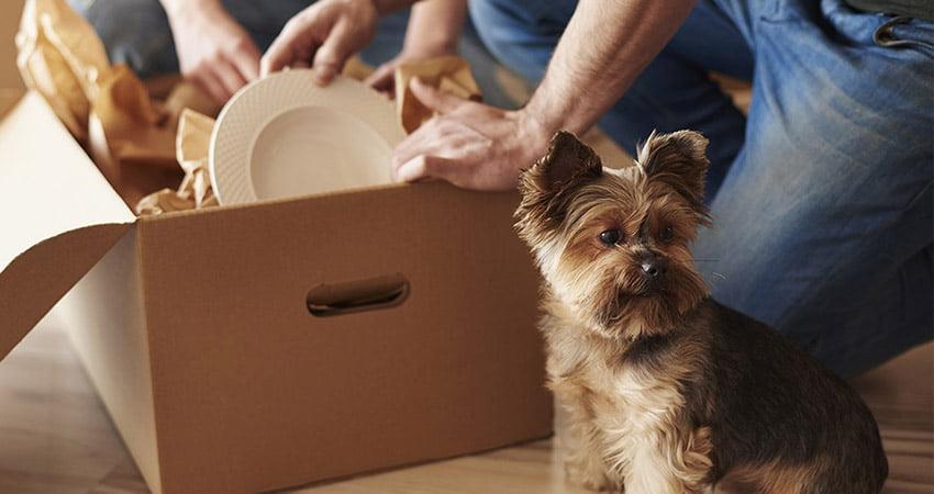 Stilef produce scatole per traslochi di massima qualità per garantire la sicurezza dei tuoi oggetti durante il trasporto